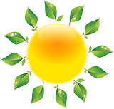 Sun with leaves