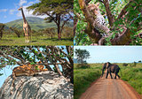 Safari in Africa. set of wild animals
