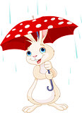 Bunny under umbrella