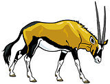 gemsbok