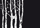 wedding invitation with birch trees, vector 