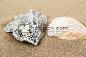 two pearl earrings and shells on sand