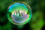 transparent bubble with reflections on a green organic background