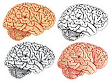 brain four variation