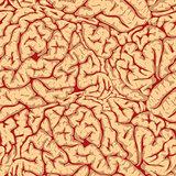 Seamless brain convolutions.