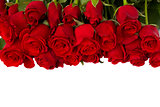 border of fresh red  roses