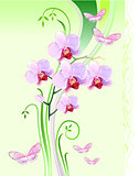 Orchids and butterflies on green background