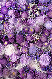 Aster Violet Background