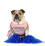 bulldog cheerleader