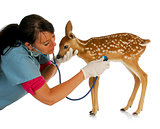 wildlife vet