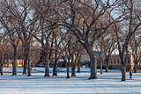 alley of old elm trees at university campus