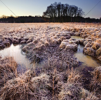 Beautiful frozen field Winter landscape with frosty grass