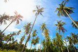 Coconut palms park