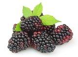 Sweet and juice blackberry