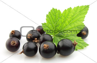 black currant with leafs