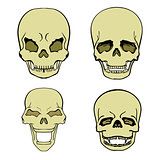 set of skulls