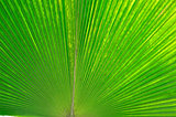 Palm leaves.