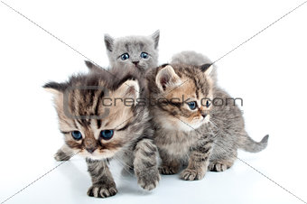 four kittens walking together