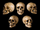 synthetical skull