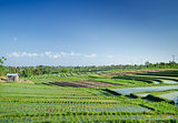 rice fields landscape in bali, indonesia