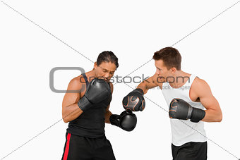 Side view of fighting boxers