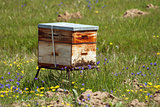 South African bee hive