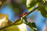 Matine True bugs