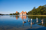 Swans near Trakai castle