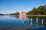 Swans near Trakai castle