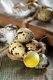 Broken quail egg.