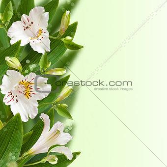 Floral border.