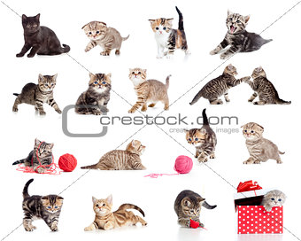 Adorable kittens collection. Little funny cats isolated on white