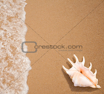 seashell top view on sea surf edge