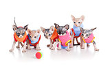 Six funny hairless kittens with ball brood of Canadian sphynx