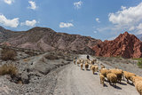 Sheep at hills of seven colours
