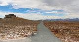 Rocky mountains plateau