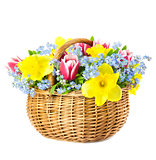 Beautiful Bouquet of  Spring Flowers into Basket on white backgr