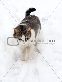 Cat on white snow
