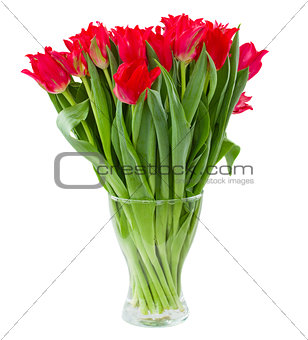 spring red flowers