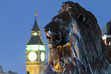 Lion in London's Trafalgar Square with Big Ben in the background