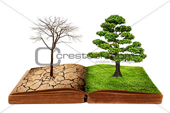 The big tree growth from a book