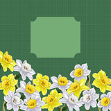 colorful narcissus floral background, vector illustration eps10