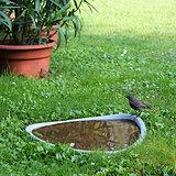 bird at the water