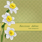 narcissus and polka don floral background, vector illustration eps10