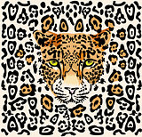Pattern with a muzzle of leopard