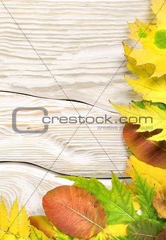 Autumn compositio on a white table