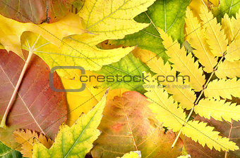 Background from leaves of different colors