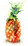 Watercolor illustration of pineapple