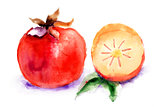 Persimmon, watercolor illustration 