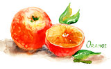 Watercolor illustration of Orange